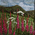 Rosebay willowherb on Black Horse Hill near Sedbergh (20x20cms £290) by textile artist Mary Taylor